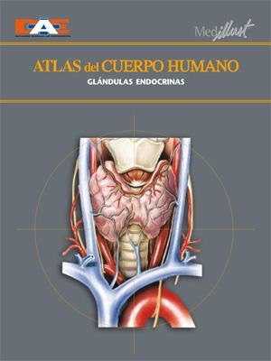 Biblioteca Digital » Atlas del cuerpo humano 14. Glándulas endocrinas